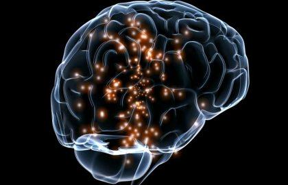 המוח שלנו ארוז בתוך בקופסה שחורה